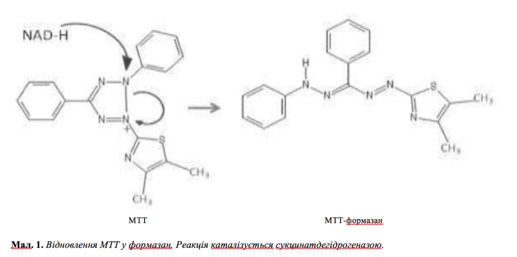 In vitro оцінка неоколагенезу після обробки філером Neauvia Stimulate